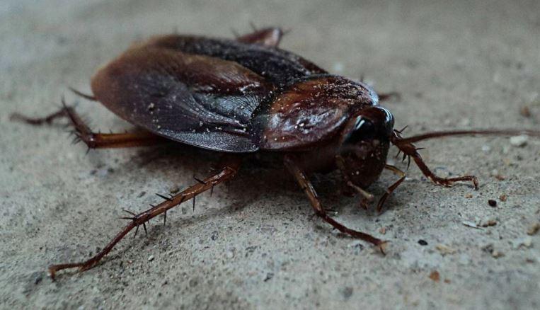 ¡Ponerle el nombre de su ex a una cucaracha ahora es posible!