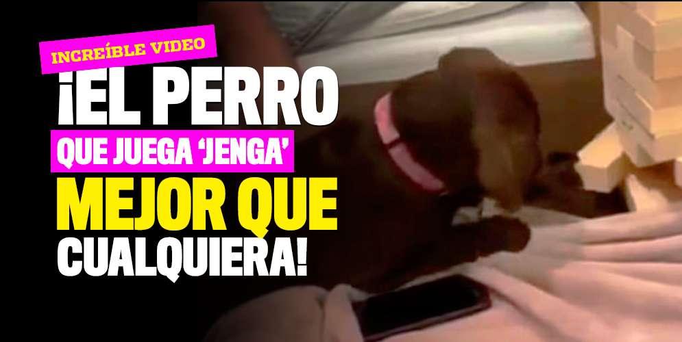¡El perro que juega 'Jenga' mejor que cualquiera!