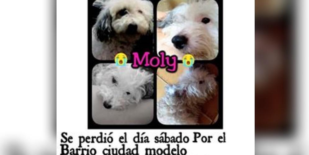 Moly se perdió en el barrio Ciudad Modelo