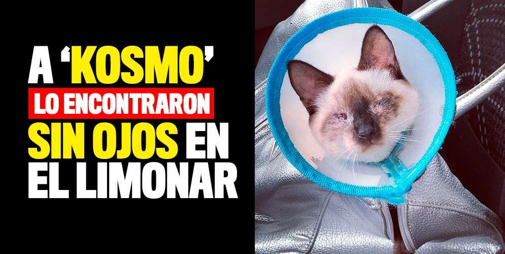 A 'Kosmo' lo encontraron sin ojos en el barrio Limonar