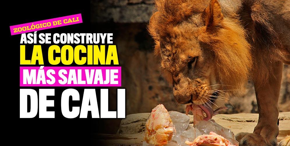 El Zoológico de Cali estrenará cocina para la dieta de los animales