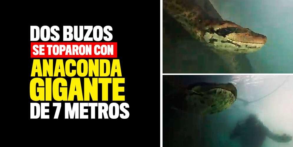 VIDEO: Dos buzos acechados por anaconda gigante de 7 me...