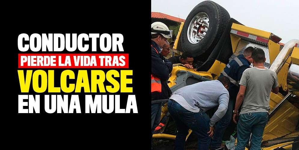 Conductor pierde la vida tras volcarse en una mula