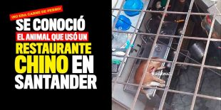 Video: Se conoció el animal que usó un restaurante chino en Santander