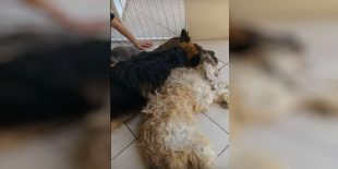 Desconsolador video de 'pelutido' llorando por su amigo
