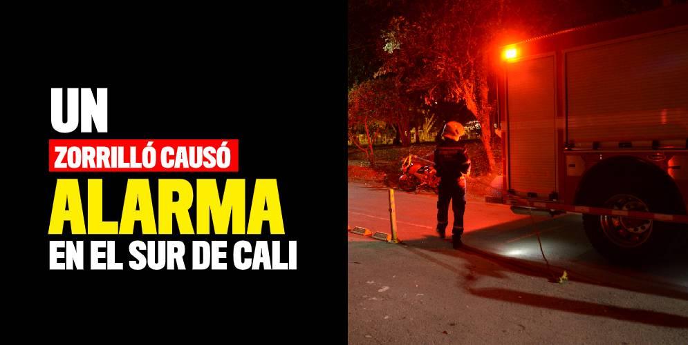 Un zorrillo causó alarma en el barrio Pampalinda
