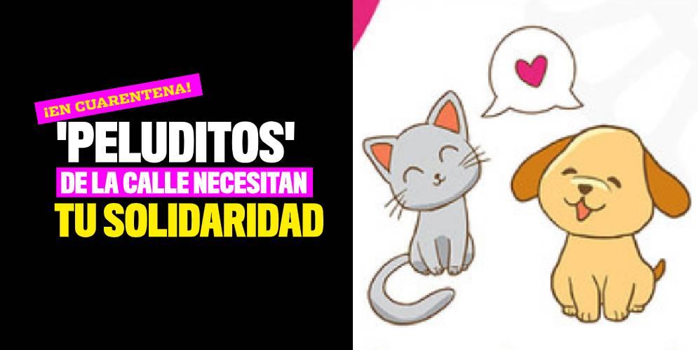¡En cuarentena! 'Peluditos' de la calle necesitan tu solidaridad