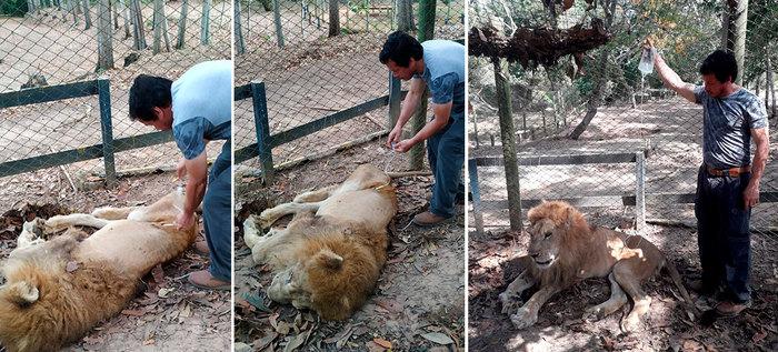 Resultado de imagen para leon jupiter