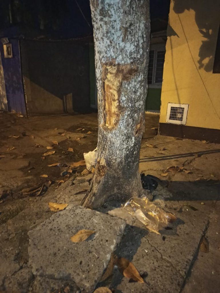 árbol accidente