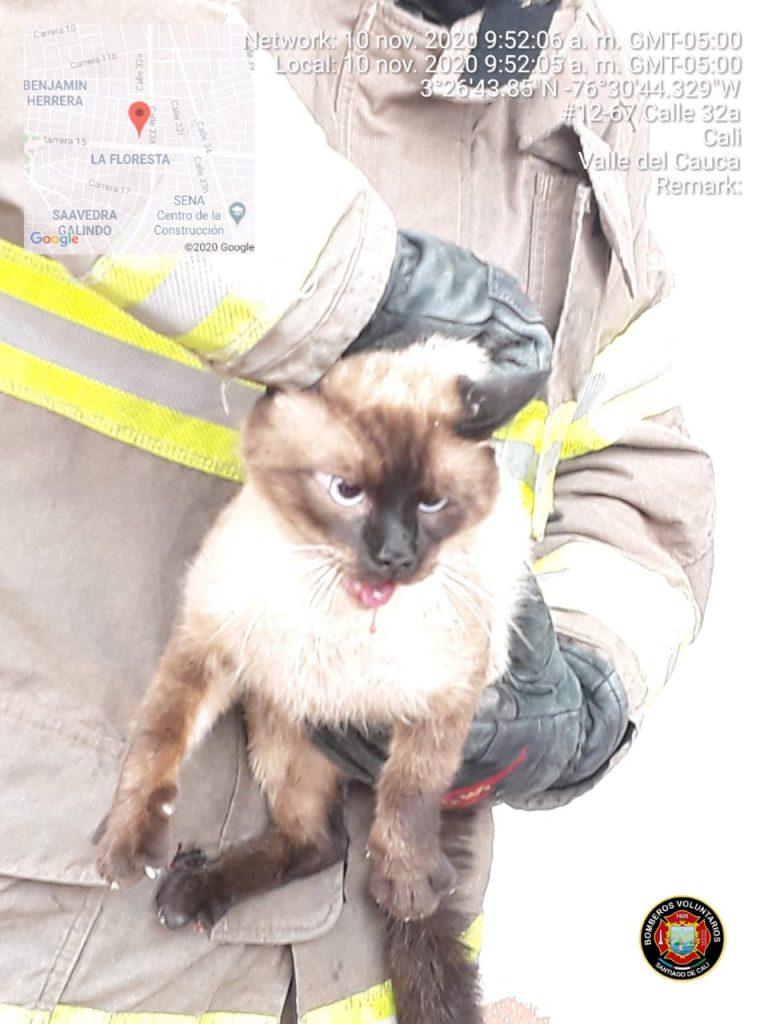 El gato tras ser rescatado y puesto a salvo por los bomberos Cali.