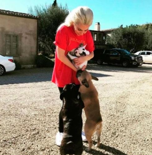 Lady Gaga ofreció 500 mil dólares y recuperó a sus perros robados