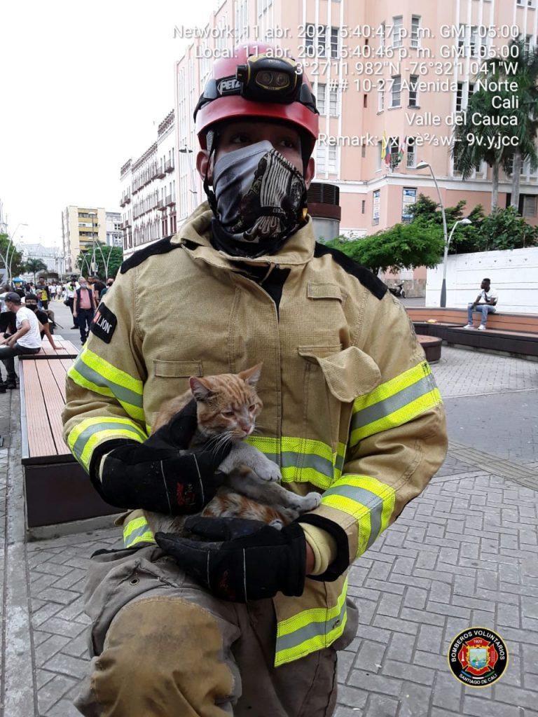 Así fue el conmovedor rescate de un gato en el Túnel Mundialista