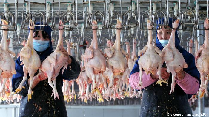 producción aviar
