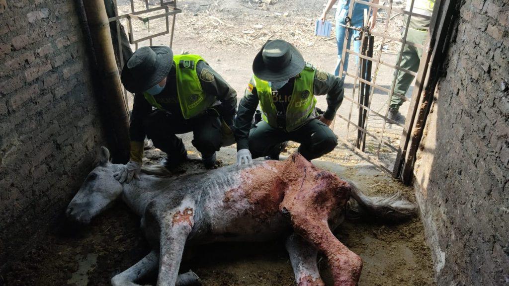 Rescatan a caballo con terribles quemaduras en Candelaria